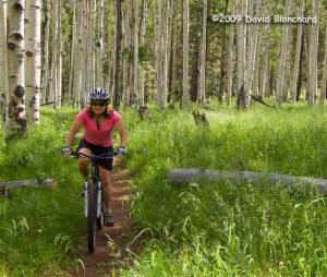 Riding amongst the ferns and aspens -- and the occasional elk -- on the Arizona Trail.