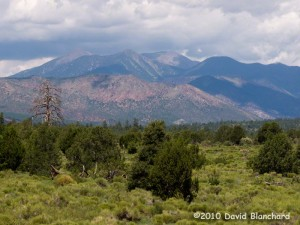 View of the San Francisco peaks near Flagstaff from the Arizona Trail.