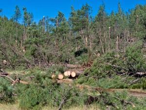 Forest Service crews quickly cleared treefall from Forest roads.