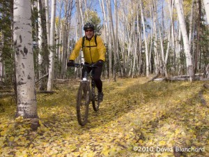 Riding an easy stretch of the Arizona Trail. The aspen leaves have fallen and left a carpet of color on the trail.