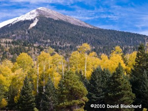 New snow on the higher elevations of the San Francisco Peaks stands in contrast to a grove of aspen in full autumn color.