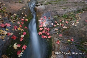 Fallen leaves lie beside rushing waters in West Fork Oak Creek in northern Arizona.