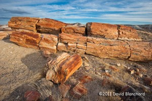 A petrified tree in the Crystal Forest area.