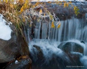 A delicate cascade of water produces icicles on the leaves and branches.