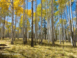 Arizona Trail and FR418.