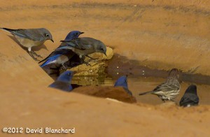 Birds gather at a water hole.