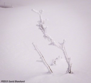 Rime covered branches poke upward through the deep snow cover.