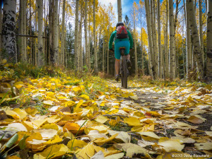 Mountain biking through the fallen aspen leaves on the Arizona Trail.