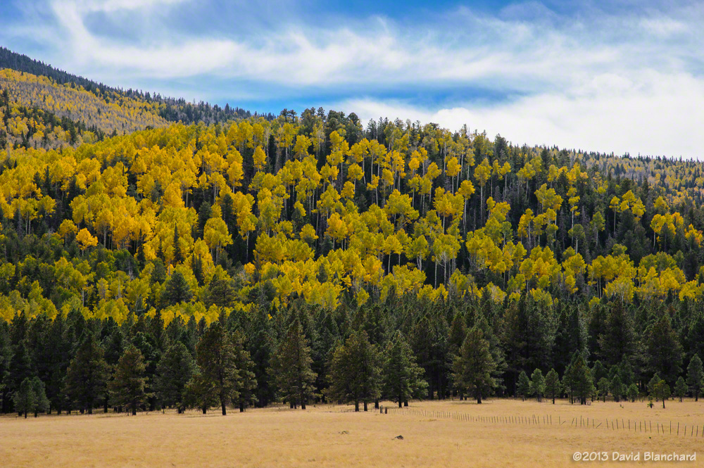 Fall Colors And Mountain Biking In Northern Arizona