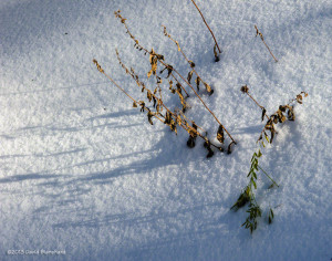 Dry grasses poke through the shallow snow.