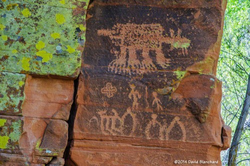 "Rock art panel containing the ""sabre tooth cat"" along with colorful lichen."