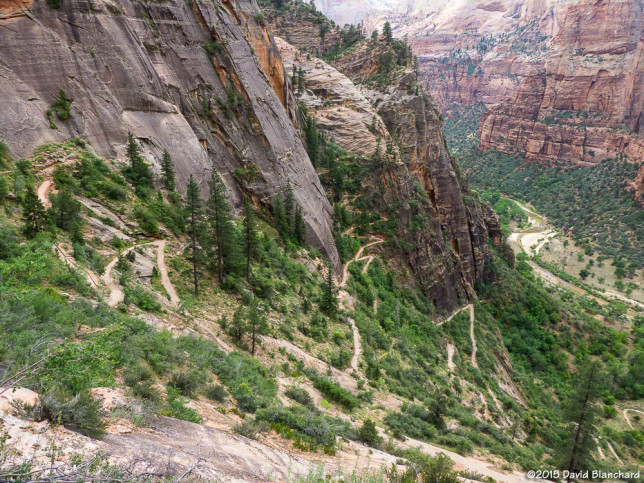 The many switchbacks of Observation Point Trail.