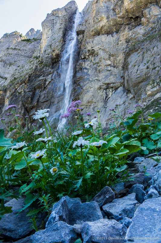 Waterfalls and wildflowers.