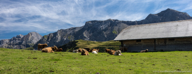 Mountains, barns, and cows, of course.