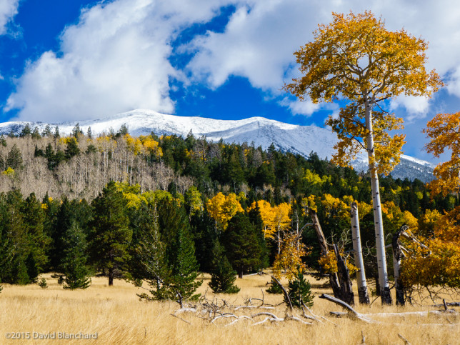 Snow on the San Francisco Peaks is framed by meadows and aspen.