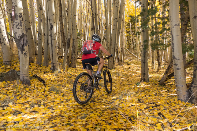 Happiness is mountain biking on the Arizona Trail through a forest of colorful aspen trees.