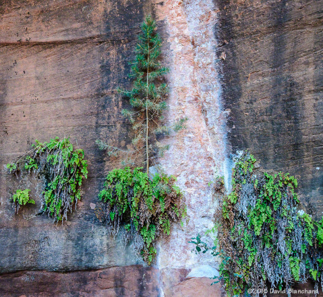 A water seep in the wall allows ferns to grow—and a small tree as well.