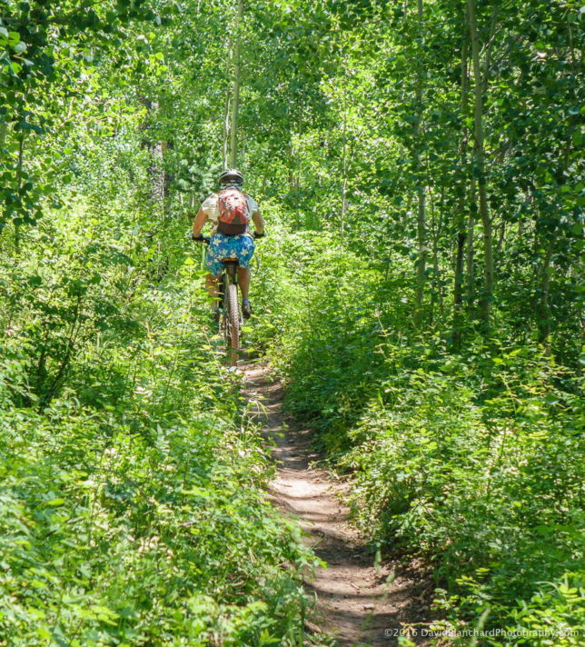 Climbing through the ferns and aspen on the Colorado Trail.