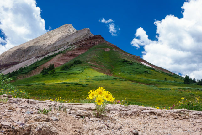 Wildflowers and mountain.