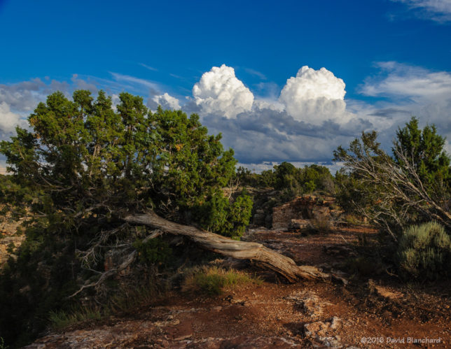 Cumulus towers developing south of Grand Canyon.