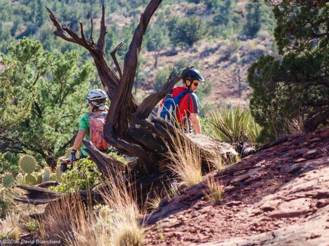 Mescal Trail.