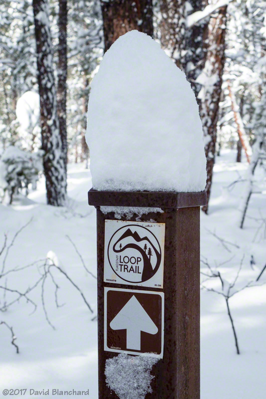 Intersection of Soldiers Trail and Flagstaff Loop Trail.