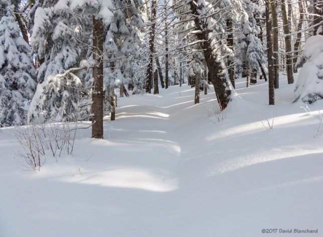 Breaking trail through new snow on the lower sections of Humphreys Peak Trail.