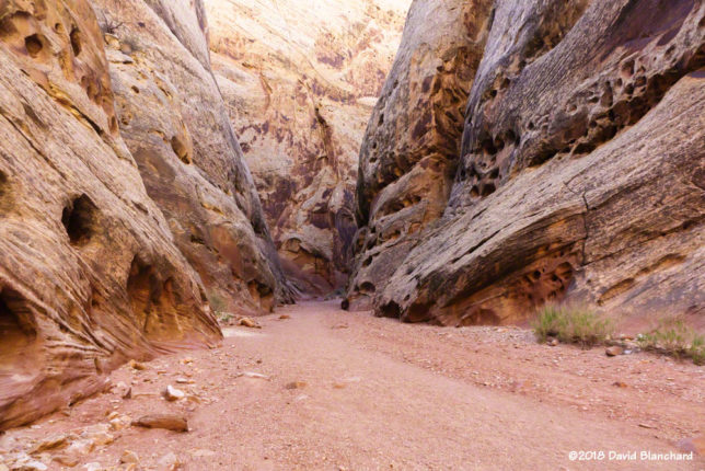 Narrow section of Grand Wash in Capitol Reef National Park.