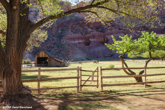 Orchards and meadows in the main visitor area of Capitol Reef National Park.
