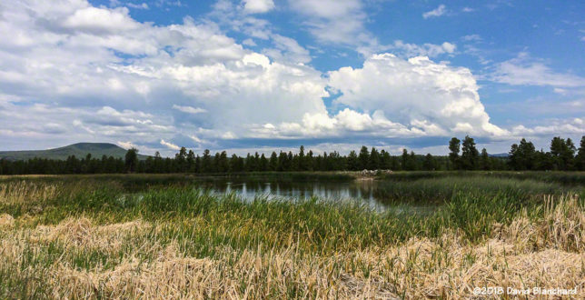 A pair of developing cumulonimbus as seen from Kachina Wetlands.