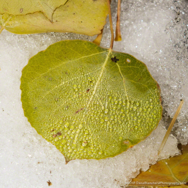 Frozen water droplets on a leaf.