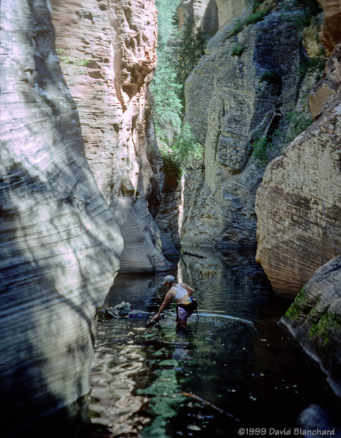 Wading through the cold pools (1999).