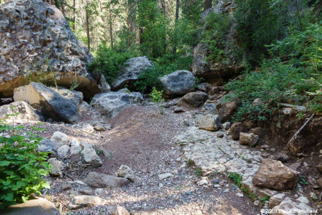 The first few miles feature a dry wash filled with boulders, sand, and thick vegetation. There is no trail.
