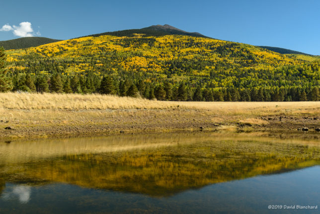 Aspen on the north side of the San Francisco Peaks. 10/08/2019.