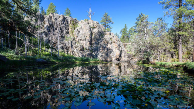 Lily pads and reflections at Pomeroy Tanks, Sycamore Rim Trail.