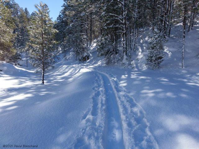 Ski tracks in Skunk Canyon.